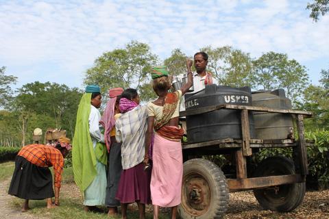 Women next to a vehicle near a tea leaf farm